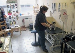 Hundesalon Dogs Wellness